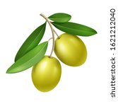 vector realistic olive branch... | Shutterstock .eps vector #1621212040