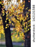 autumn leaves  | Shutterstock . vector #162131588