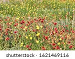 A Field Of Texas Wildflowers  ...