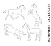 Set Of Line Horses. Isolated...