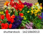 Variety Of Spring Flowers In...