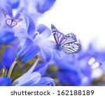 Stock photo flowers on a white background dark blue hand bells and butterfly 162188189