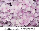 Stock photo purple hydrangea flowers for background 162224213