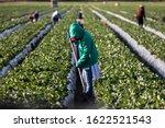 Woman farm worker in green...