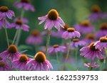 Floral Display Of July...