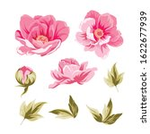 chinese peonies bud collection. ... | Shutterstock .eps vector #1622677939