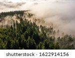 Mystic Fog In The Forest Of The ...