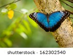 Blue Tropical Butterfly In The...