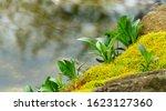 Bright Green Flowering Graceful ...