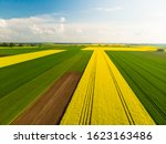 Field May Rapeseed Drone...