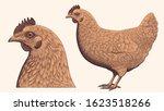 Chicken And Chicken Head....
