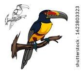 aracari toucan bird sitting on... | Shutterstock .eps vector #1623803323