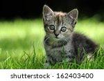 Stock photo kitten 162403400