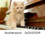 Stock photo fluffy persian kitten walking on the piano 162425339