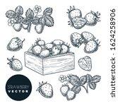 strawberry berries sketch...   Shutterstock .eps vector #1624258906
