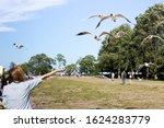 Feeding Birds On The Sea Shore