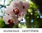 beautiful pink orchid flowers... | Shutterstock . vector #1624735606
