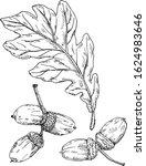 Hand Drawn Oak Tree Leaf...