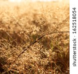 meadow in the dew into a sunny... | Shutterstock . vector #162518054