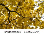 autumn trees with yellowing... | Shutterstock . vector #162522644