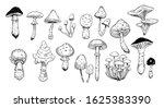 set of mushrooms. outline with... | Shutterstock .eps vector #1625383390