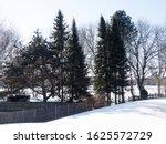Tall Trees In Backyard In A...