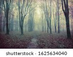 A Spooky Landscape Of An...
