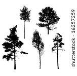 silhouettes of the oak  birches ... | Shutterstock . vector #16257259