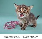 Stock photo studio portrait of funny little kitten with indian bracelets studio shot 162578669