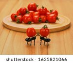 Two Decorative Funny Ants On...