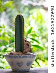 Small photo of Cactus helps purify the air Planted plants help the weather better. a succulent plant with a thick, fleshy stem that typically bears spines, lacks leaves, and has brilliantly colored flowers.