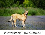 Happy dog standing on wet sidwalk looking at camera on sunny day in nature. Green trees and bushes on background