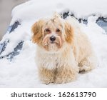 portrait of cute dog in snow | Shutterstock . vector #162613790