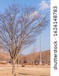 Leafless Tree Hibernating...