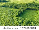 Small photo of Top down aerial view of green summer forest with large area of cut down trees as result of global deforestation industry. Harmful human influence on world ecology.