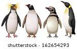illustration of the penguins on ... | Shutterstock .eps vector #162654293