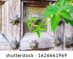 Small photo of antique door were designed to instill a sense of elegance and awe.