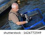 Small photo of hatchery worker netting kokanee salmon