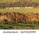 steaming heaps of cow dung in... | Shutterstock . vector #1627610599