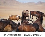 Two wild stallions fighting in the waterhole in the Great Basin desert Utah, surrounded by other horses come to drink.