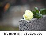 White rose on grey granite...