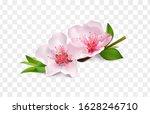 almond branch blossom isolated... | Shutterstock .eps vector #1628246710