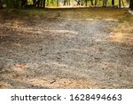 Dirty Pathway In Forest Dry...