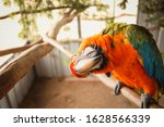 Quirky Macaw Showing Off For...