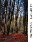 amazing fall forrest. lovely... | Shutterstock . vector #162860114
