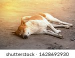 Stray Dog Sleeping On The Floor