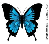 animal,antenna,beautiful,beauty,black,blue,bright,butterfly,color,delicate,design,dotted,eeler,elegance,entomologist