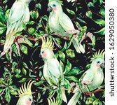 watercolor white parrot summer...   Shutterstock . vector #1629050380
