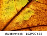 dry autumn leaf close up | Shutterstock . vector #162907688