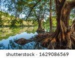 Camecuaro Lake  With Water...